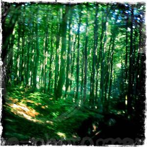 Zauberwald-Rügen2