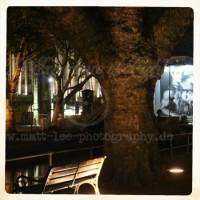 Baum in der Nacht
