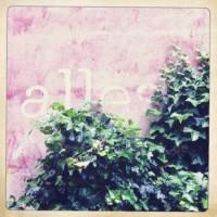 Wand mit Efeu 2