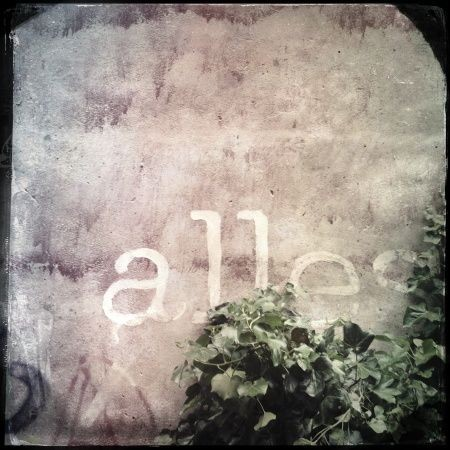 Wand mit Efeu 3