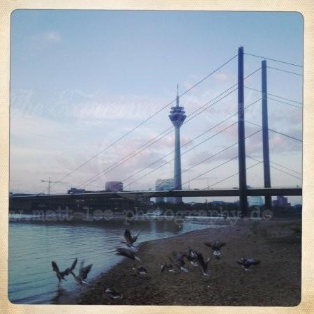 Rheinkniebrücken Gänse