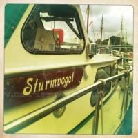 Sturmvogel am Hafen