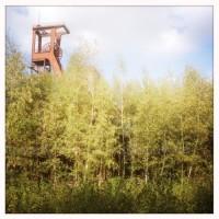 Birkenwaldwinde
