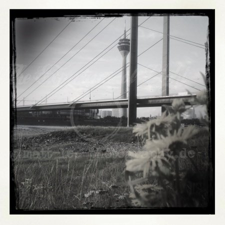 Die Brücke hinter den Blumen