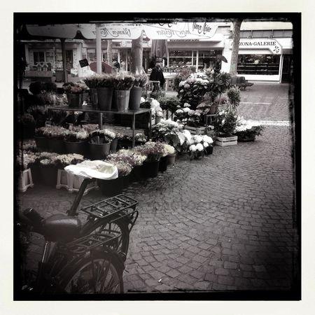 Die Blumen am ende der Straße