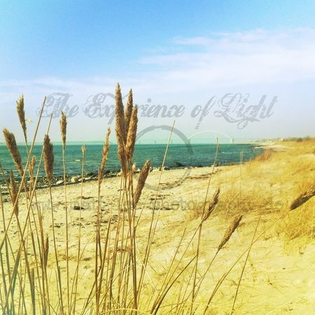 fehmarn-yellowbeach