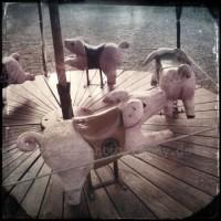 Pig Rotation